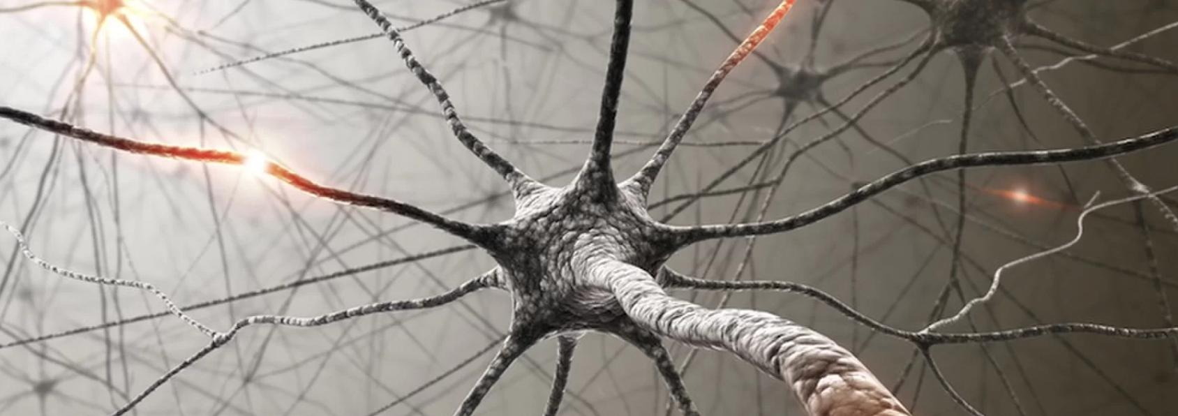 الجهاز العصبي المركزي